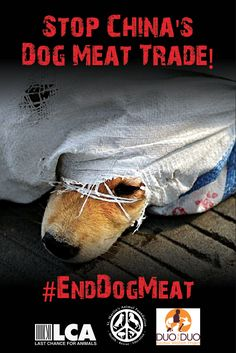 Help Stop the Yulin Dog Meat Festival! Tell the Chinese embassy that dog slaughter must end!!! http://www.stopdogmeat.com/