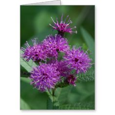 Wildflower Greeting Card. Greeting Card
