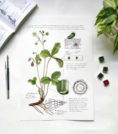 Anatomy And Physiology, Botany, Biology, Illustrations, Watercolor, Plants, Pen And Wash, Watercolor Painting, Illustration