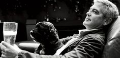 George Clooney won over Einstein, a rescue dog, by rubbing meatballs on his shoes. The dog was all over the movie star!