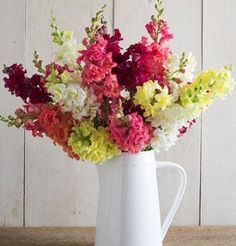 Also known as an azalea type, Madame Butterfly has double petals creating full, fluffy blooms with a Victorian look. July Flowers, List Of Flowers, Annual Flowers, September Flowers, Summer Flowers, Snapdragon Flowers, Antirrhinum, Madame Butterfly, Garden Seeds