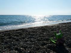 Embriagarse de olor a mar Tras una década desde su partida, recalaba a su hogar. Su partida no había sido...