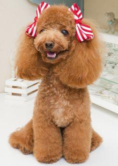 キャンディ キャンディ --愛犬の友 ヘアスタイルカタログ--