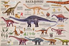Little Boys Bedroom Ideas Dinosaurs Kids Rooms