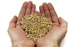 allgrains.net - All Grain Brewing