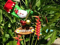 Pura vida in Costa Rica at Christmas time! Follow us on Facebook at  https://www.facebook.com/LivingInCostaRica