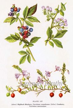 Idea for blueberry watercolour tattoo