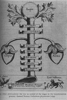 """Arbor philisophica. The tree as a symbol of the stages in the transformation process. Samuel Norton """"Catholicum physicorum"""" Frankfort (1630)."""