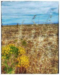 Calander, Israel, Vineyard, Mountains, Nature, Outdoor, Outdoors, Naturaleza, Vine Yard
