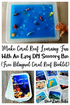 This fun coral reef sensory bin with a learning twist is perfect to teach young children about the ocean and how to take care of it. Includes free a printable booklet with real photos in Spanish, English and bilingual. Educational Activities For Toddlers, Calming Activities, Sensory Activities, Sensory Tubs, Sensory Boxes, Sensory Play, Early Learning, Fun Learning, Lessons For Kids
