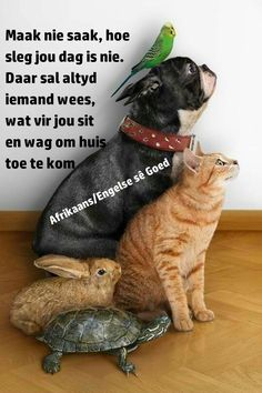 Lekker Dag, Afrikaanse Quotes, Goeie More, Minions, Funny Minion, Good Morning, Words, Cats, Animals