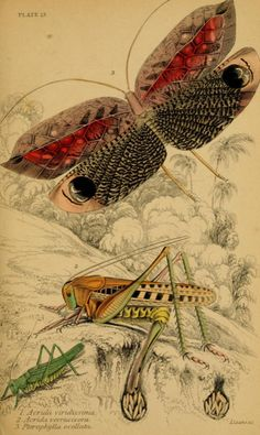 Sir William Jardine, James Duncan, The Naturalist's Library, Entomology, Vol. 1, 1840.