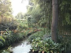 Jardin des Nymphéas - Giverny - Juillet 2013
