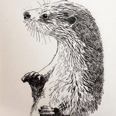 Inktober 6 : otter (lutra lutra) la loutre . Inkdrawing , copyrightP.V #animalart #animal_artists #inkdrawing #inktober2017 #artanimalier #loutre #otter