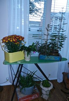 Old ironing board and crate boxes to display plants