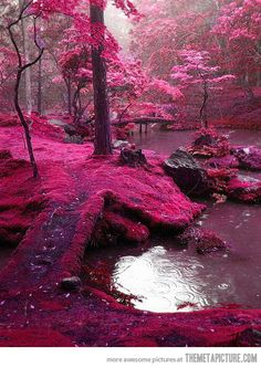 Pink forest.