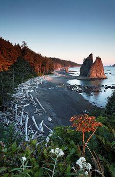 Sea stack at sunset, Rialto Beach, Olympic National Park, Washington