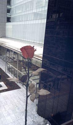 http://instagram.com/p/0yskhsrSzD/   Museo de #arte de #NewYork.  Rosa en solitario
