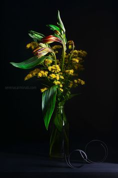 Red and yellow alstroemeria with solidago flower , on black background. Still life photography by Serena Carminati