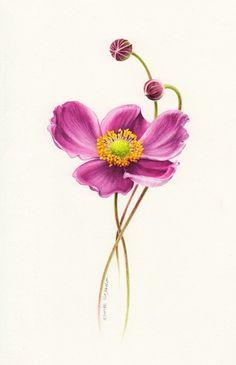Botanical Art Painting ~ Eunike Nugroho  #floral #illustration: Art Paintings, Anemone Tattoo, Flower Illustrations Art, Floral Illustrations, Art Flowers, Anemone Flower Watercolor, Botanical Art, Anemones