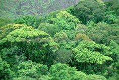 Tijuca National Park, Brazil