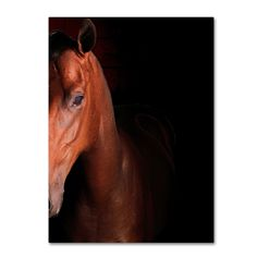 'Kentucky horse Intense' by Preston Photographic Print on Wrapped Canvas