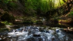 Creek - Creek