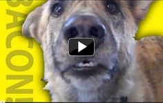 Ein sprechender Hund entzückt Irland
