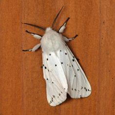 蛾・蝶 : 小さき者たちの世界