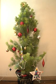 Australian Christmas Touch Mallee Design Native Tree Woolley Bush Adenanthos