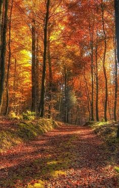 Ideas for mother nature photography autumn leaves Beautiful World, Beautiful Places, Beautiful Pictures, Autumn Scenes, Autumn Photography, Photography Kids, Fall Pictures, Belle Photo, Beautiful Landscapes