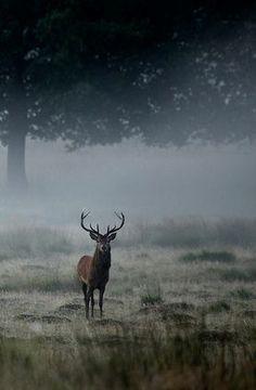 Misty morning. #elk #animals