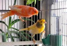 Cuidado de aves domésticas
