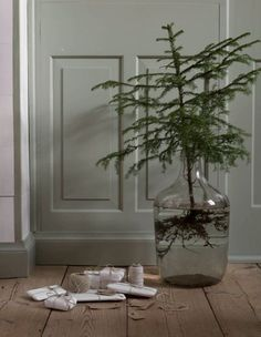 Living trees in water in glass containers