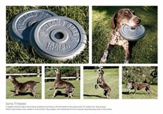 Iams Frisbee - and other Creative Promotional Product Marketing Campaigns Guerrilla Marketing Photo