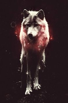 """""""The Wolf is companion to all who need it... But beware, for some wolves only wish to kill..."""""""