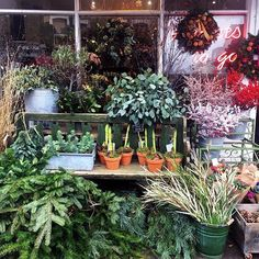 So much Christmas loveliness at @thefreshflower1 🎄💕🎄💕🎄
