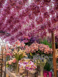 Bloemenmark Flower Market, Amsterdam, the Netherlands ~ the world's only floating flower market, founded in 1862.