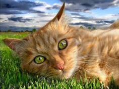 Kociak zielonooki
