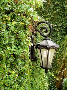 Loving this great overgrown lush wall with one single lantern light!