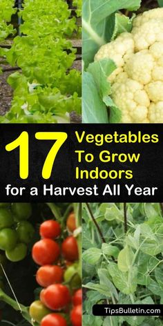 Learn how growing vegetables indoors year round is easy and fun Even apartments with limited space have enough room for a few pots of vegetables for some much needed organic gardening indoor vegetables growvegetables Growing Vegetables Indoors, Easy Vegetables To Grow, Easy Plants To Grow, Planting Vegetables, Organic Vegetables, Growing Tomatoes, Growing Herbs, Herbs To Grow Indoors, Cheap Plants