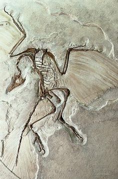 Fossil - They cried out to Him,but God did not hear, yet their memory lives on in stone.