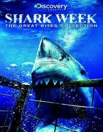 Shark on Pinterest | Sharks, Shark Tooth and Shark Cake