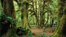 Resultado de imagen para fotos de bosque encantado