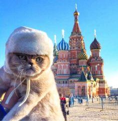 ぬこまみれ : 画像 Russian Cat in hat Crazy Cat Lady, Crazy Cats, Russian Cat, Russian Beauty, Funny Animals, Cute Animals, National Cat Day, Video Chat, Fancy Cats