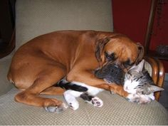 Pets and their pets... Chancey would love to snuggle w/ the cats... The cya aren't having any part of that