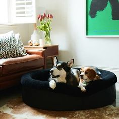 Frank & Arlo Luxury Dog Bed Round Style - with Zipper Cover - Sheep Wool Washable Easy Clean Modern Design Durable Soft Pet Bed - Black (Large) Luxury Pet Beds, Designer Dog Beds, Dog Beds For Small Dogs, Dog Rooms, Cat Room, Black Bedding, Sheep Wool, Your Pet, Pets