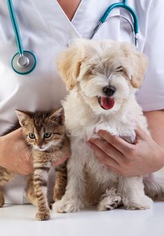 A urinalysis is one of the most important diagnostic tools in veterinary medicine. Here's what it can tell you about your pet's health...
