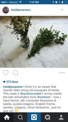 Herb Bouquet, Chive Blossom, Hospital Gifts, Fennel, Things To Think About, Wedding Flowers, Seeds, Hospitality, Plants