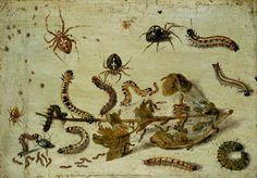 Various Spiders and Caterpillars, with a Sprig of Gooseberry  Jan van Kessel the elder (1626–1679)
